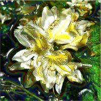 Rhododendron Aromatherapy Essential Oil